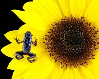 Yellow Flower, Flower Art, Sunflower, Poison, Dart Frog, Flower Wall Art