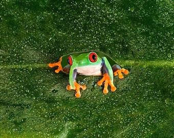 Frog Art, Tree Frog Wall Art on Leaf