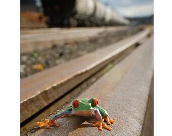 Train Art, Frog on Train Tracks, Railroad Trains