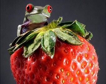 Strawberry Kitchen Art Frog on Red Strawberries