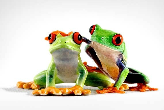 Buddies - Frog Portrait - Friendship print - Best Friends