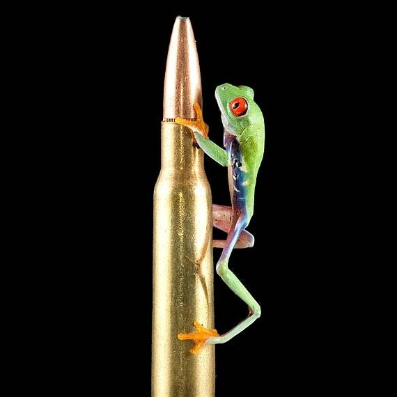 Bullet Shell Live Frog Humor Hunting