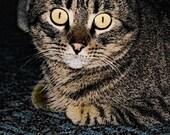 Mackerel Tabby Cat Photoshopped Fine Art Photography - 5x7