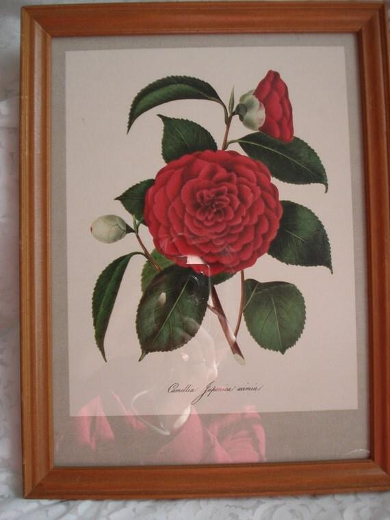 Vintage Botanical Framed Print Camellia Floral Shabby Cottage Garden Chic Red Flowers Japonica