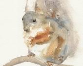 Squirrel, original watercolor painting, animal art, watercolour painting art.
