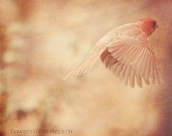 Bird Photograph, Cardinal, Red, Nature print, Art Print, soft focus