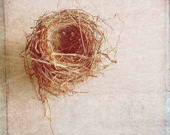 Birds Nest Photograph, Vintage Style, Fine Art 5x5 Print by Kerry