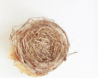 Birds Nest Photograph, Bird Nest, Spring Fine Art 5x5 Print, nature photo