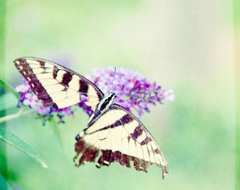 Butterfly Photograph Spring Flower Green Yellow Square photo nature photography Swallowtail