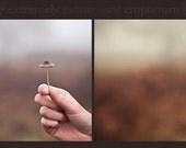 Photoshop Action - Mushroomie