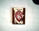 Vintage Victorian Anotomy. Heart Medical Illustration on salvaged wood Wall Art