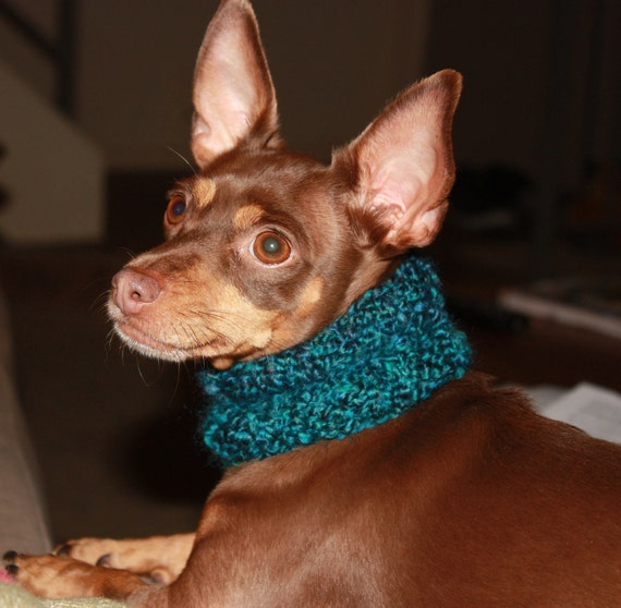 Small Dog Knitted Cowl / Scarf in Teal