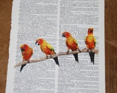 Bright, colorful Conure birds parrots printed on vintage dictionary page.  Vintage dictionary paper with Conure birds.