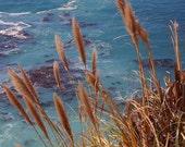 Big Sur Cove  - Vintage Photograph
