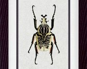 Insects Bugs Entomology 16 Vintage Illustration Wall Decor Print 8 x 10 (vzb016)