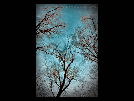 Teal Home Decor - Landscape Photograph, Tree, Forest - Three Trees Wall Art Color - Teal and Red Art Art Print