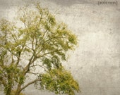 Possibilities Of Summer - 8x10 Tree photography print nature wall art home nursery decor grey spring summer cloudy gray green brown branches