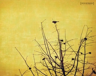 Long Way Down - 8x10 Bird tree photography branches photo print silhouette perched photograph wall art home decor yellow gold nature nursery