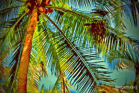 Island Palm - 5x7 Photography palm tree print photo nature island beach colorful beachy vacation home decor wall art bright blue green