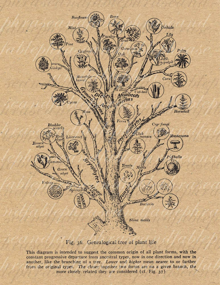DIY Guide to Foraing | Homemade Recipes http://homemaderecipes.com/healthy/ the-foragers-bible-identifying-edible-wild-plants
