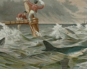 1894 Antique fine lithograph of a SHARK ATTACK, SHIPWRECK. Sea Life. 118 years old print.