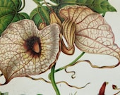 1897 Antique fine lithograph of ORCHIDS, CARNIVOROUS and TROPICAL Plants. 115 years old gorgeous print.
