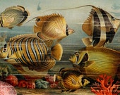 1894 Antique lithograph of TROPICAL FISHES, Sea Life, Seascape, Red Coral. 123 years old gorgeous print.