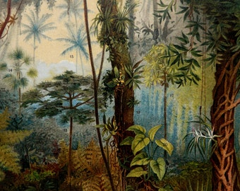 1897 Antique fine lithograph of TROPICAL FLORA, Flowering Plants, Tropical Flowers. 119 years old gorgeous print.