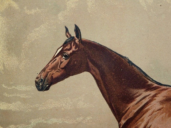 1890 Antique fine lithograph of a BROWN HORSE. 122 years old gorgeous print.