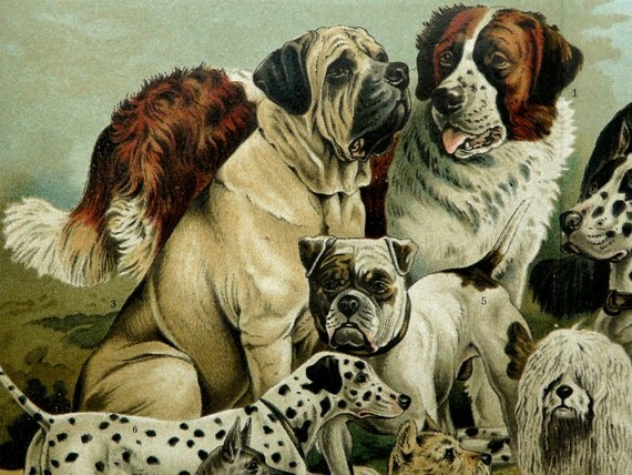 1894 Antique fine lithograph. Different species of DOGS. 118 years old gorgeous print.