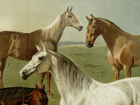 1894 Antique fine lithograph. Different species of HORSES. 118 years old gorgeous print.