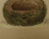 1892...Antique Nest & Egg Nature Print by Morris...Wood Lark  LXXIII