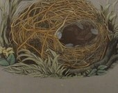1892...Antique Nest & Egg Nature Print by Morris...Willow Warbler CXXVII