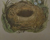 1892..Antique Nest & Egg Nature Print by Morris...Wood Warbler CXXVI