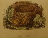 1892...Antique Nest & Egg Nature Print by Morris.....Nightingale  CXVIII