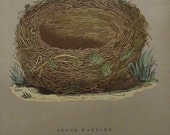 1892...Antique Nest & Egg Nature Print by Morris.....Sedge Warbler CXVI