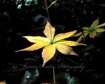 Dramatic Flower Spotlighted in Nature, Fine Art Photo Print