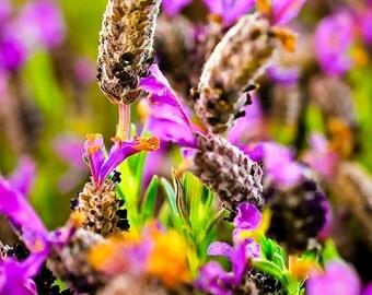 Purple Flowers 3-Rungis Market, Fine Art Photography France,multiple sizes available-purple-flowers-floral-nature-up-close-unique