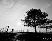 "Tree silhouette in the vineyard - Black and white Photo -  8""x12"" / 20x30 cm wall decor print"