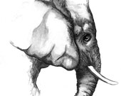 Signed Indian Ink and Charcoal Elephant Print