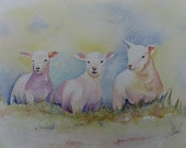 LYNN DOLMAN  Sheep Painting