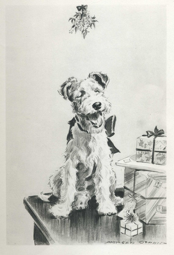 Smiling FOX TERRIER Under Mistletoe Vintage 1940s Dog Print Morgan Dennis Art Print 74