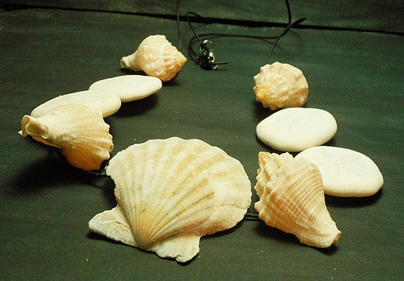 Scallop Sand Dollar King's Crown Seashell Necklace