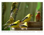 Finches closeup- photo greeting card