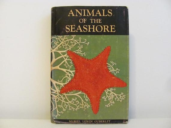 Guide To Invertebrates Of The Pacific Coast 1962 Edition Animals Of The Seashore