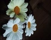daisy bobbies