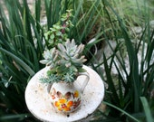 Succulent and Cactus Planted in Mid Century Style Water Pitcher
