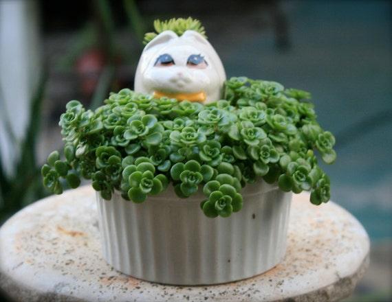 Kitsch Kitty Cat Succulent in White Ceramic Pot