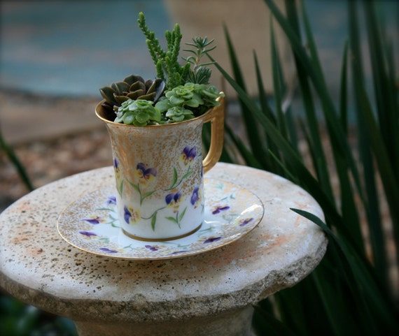 Downton Abbey Inspired Victorian Pansy Flower Teacup Succulent