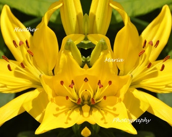 8X12 Abstract Print, Yellow Asiatic Lilies, Fine Art Photography, Cheerful Mirror Reflection